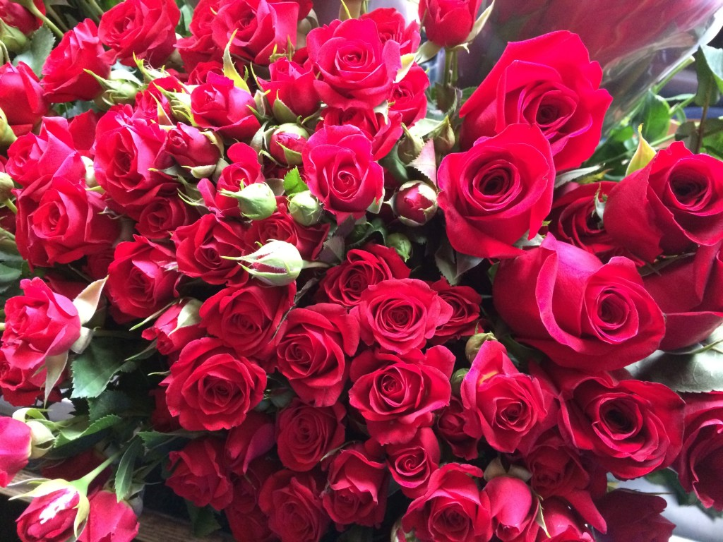 Red Kentucky Derby roses Pinewoods Yankee Farm Lee NH