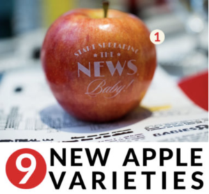 Have you heard? There's 9 new apple varieties that will completely surprise you in this apple variety chart. Click to see what each variety of apple is along with unique ways to use apples for parties. As seen on Fun to Eat Fruit www.funtoeatfruit.com
