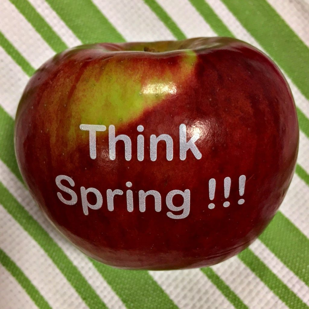 "Celebrate the arrival of spring with a non candy treat for family and friends! Fun to Eat Fruit offers apples imprinted with an edible saying, ""Happy Spring!"" Click to see 9 creative, healthy, non candy treat and favor ideas. As seen on Fun to Eat Fruit www.funtoeatfruit.com #favors #favorideas #springishere #monogrammed#businessfavor #specialevents #noncandy #ediblefavors"
