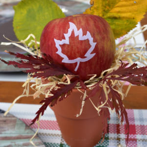 Apple Favor Terracota pot Fun to Eat Fruit